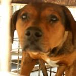 Sacrifican 60 perros a la semana en Irapuato