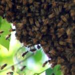 Una anciana y seis niños picados por abejas en fiesta infantil