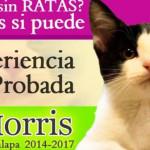 El CandiGato Morris recibió votos de verdad