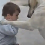 Impresionante video de perro que cuida a niño, una historia de amor