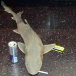 ¡Tiburón a la vista!… en el metro de Nueva York