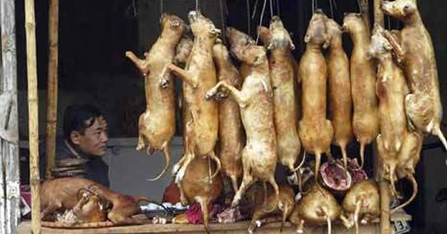 Photo of La carne de perro y gato son un manjar en China; ONG pide un alto