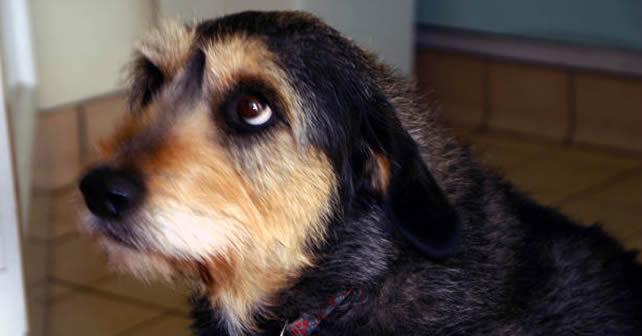 Photo of Una ley permite matar perros callejeros