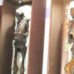 Momias, visitarán Oaxaca