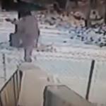 El ataque del gato malvado sobre la nieve (video)