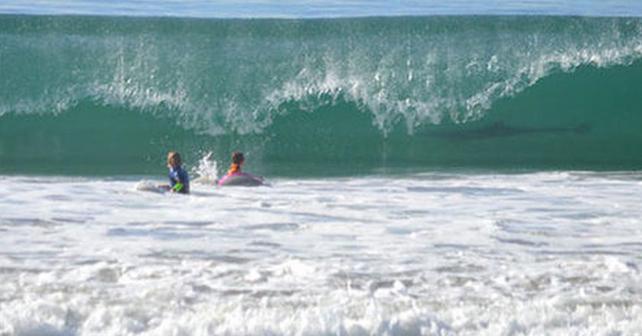 Photo of Se les cuela tiburón en la foto