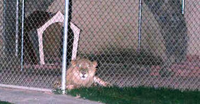 Photo of Tenían de mascota a león
