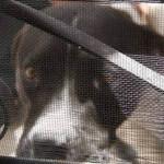 """En León; """"el perro me dijo que me lo llevara"""": ladrón"""