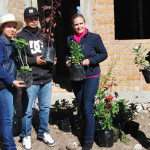 A reforestar Cuerámaro con árboles frutales