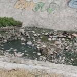 Situación de los ríos que pasan por Irapuato, a propósito del Día mundial del Agua