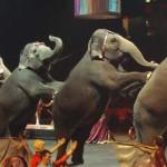 Uso de animales en circo ¿regularse o prohibirse?