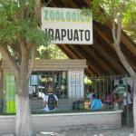Buscan que Zoo Irapuato sea atractivo
