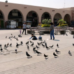 Fertilizante, provocó la muerte de aves en el Centro Histórico