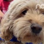 Sacrifica CANI hasta 230 perros al mes
