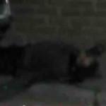 Asesinan a mecánico en Pénjamo