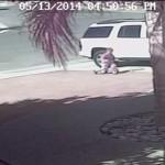 Gato rescata a un niño del ataque de un perro (VIDEO)