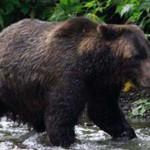 Mujer sobrevive a un ataque de oso fingiendo estar muerta