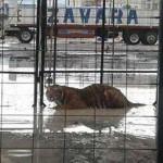 Detienen instalación de circo por falta de documentación