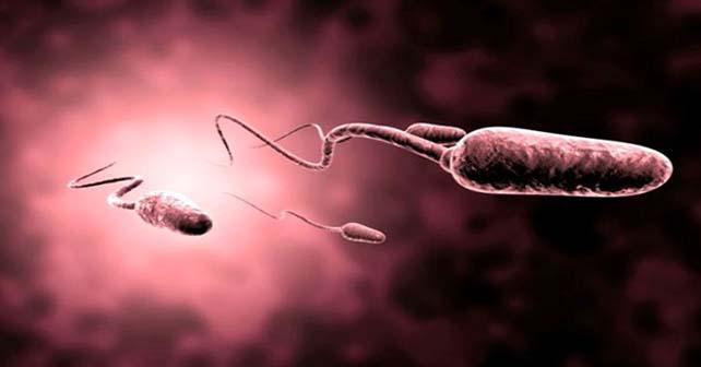 celular-esperma