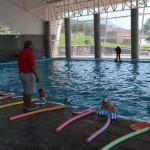 Afluencia en cursos de centro acuatico