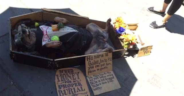 dogs funeral
