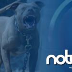 Niño atacado por pitbull en Villagrán será intervenido quirúrgicamente