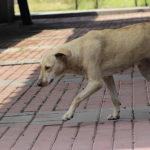 Abandono, desinterés y mal comportamiento: algunas causas de abandono en mascotas