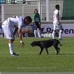 Un perro interrumpe partido en Argentina