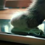 Gatos promocionan el nuevo teléfono de Microsoft