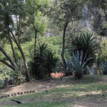 Reforestarán quitando árboles en Viveros