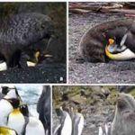 Sexo entre dos especies distintas: focas vs pinguinos