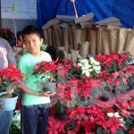 La flor de Noche Buena comienza a inundar las calles de Guanajuato