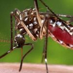¡Recompensa…! a quien entregue un mosquito vivo