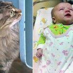 Gato callejero salva a un bebé de morir de frío