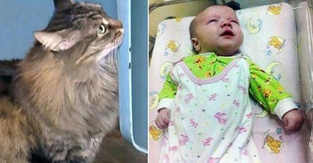 Photo of Gato callejero salva a un bebé de morir de frío