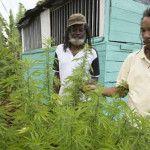 Legalizan la marihuana en Alaska y Jamaica