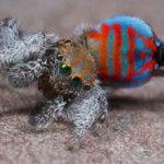 Descubren dos nuevas especies de arañas