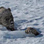 Hallan momias abrazadas durante 56 años, ¡a 5,300 metros de altura!