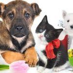 La interacción con tu mascota genera beneficios para la salud