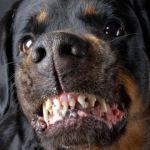Hojalatero mata a perro bravo y 9 hombres le fracturan el cráneo en Abasolo