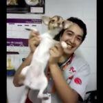 Maltratan a perrito empleados de +Kota (video)