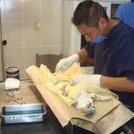 Superan meta de esterilización de mascotas