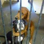 Kala y Keira ¡están a salvo!, gracias a las redes sociales