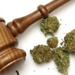 Podría darse el primer caso de Marihuana medicinal en México