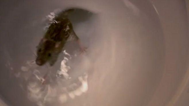 rata en el baño