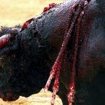 Prohíbe Coahuila corridas de toros