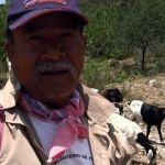 """Aguantar la vara, ni modo de colgarme"": Campesino, pulgón amarillo"