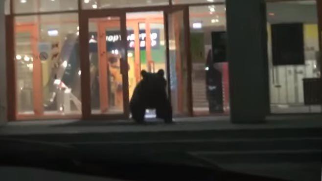 Photo of Matan a oso que entró a centro comercial