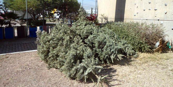 Photo of Navidad sustentable y concurso navideño