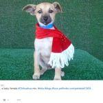 Chihuahua se tiñe de blanco por las bajas temperaturas